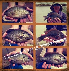 9 Best Pond & Lake Stocking Fish images in 2017 | Fish for