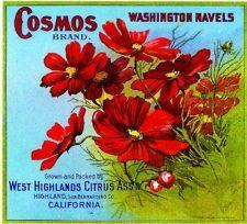 Highland San Bernardino Cosmos #3 Flowers Orange Citrus Fruit Crate Label Print