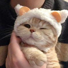 Lưu = follow Cute Baby Cats, Cute Little Animals, Cute Funny Animals, Kittens Cutest, Cats And Kittens, Cute Dogs, Wallpaper Gatos, Gatos Cool, Cute Cat Memes