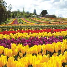 fr $1588 + $455 taxes* Early bird discounts up to $400 per couple!  Click here to book now! http://www.dynastytravel.com.sg/?/ch=group_tours_english=country_english_australia=AC_sVKPxGgw_20130423135128