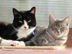 .これらは私の将来の猫です。