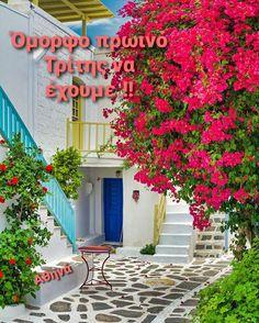 Good Morning Good Night, Greek Islands, Succulents Garden, Wonderful Images, Wonders Of The World, The Good Place, Cool Photos, Greece, Sidewalk