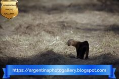 A virtual journey through the National Parks of Argentina (# 5): Rio Pilcomayo. | Argentina Photo Gallery Floating Plants, Nature Reserve, Bird Species, Amphibians, Rio, Photo Galleries, National Parks, Journey, Gallery