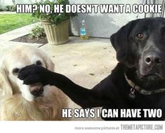 Totally my dog around other dogs.