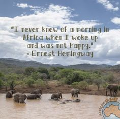 Come visit us in Africa!  http://www.africanimpact.com/conservation-volunteering/wildlife-research/african-wildlife-big-5-conservation-project-kwazulu-natal-south-africa