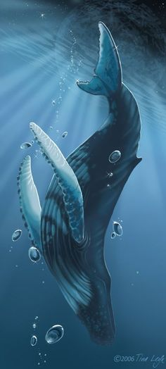 The Humpback Whale; one of the World's Most Beautiful Creatures! Ocean Art, Ocean Life, Orcas, Whale Painting, Whale Drawing, Whale Art, Whale Sharks, Whale Tattoos, Urbane Kunst