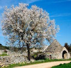 Valle d'Itria. Picture by Michele Miccoli