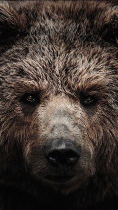 Trains, Teddy Bears and abandoned places Animals Beautiful, Cute Animals, Bear Tattoos, Bear Head, Bear Art, Animal Faces, Bigfoot, Outdoor Life, Black Bear