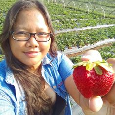 Because friends are asking to bring them twin strawberries. Spent more than an hour looking for one per friend. But I'll probably end up eating this on the way back home. Philippines Country, Baguio City, The Way Back, Trinidad, Strawberries, Lifestyle Blog, Harvest, Travelling, Exotic