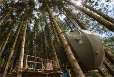 High above the ground, among the #trees, is where you can #rest your head inside a #TreeTent! No roughing it while #camping at #RedKiteTreeTent, its #glamping!  #Travel #UKGlamping #LuxuryCamping #Sheepskinlife