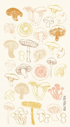 Mushroom Illustration chanterelle porcini shiitake oyster Ohn Mar Win