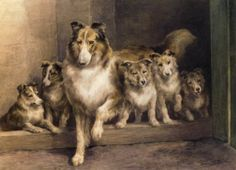 Collie At home - Google Search