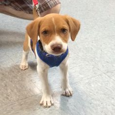 This cute little guy is Sully, he came in to see us yesterday for the first time with his new family. #henryandrumble #dogsofinstagram #puppiesofinstagram #puppy #dogsofgrandrapids