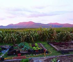 View deals for Gorman's Clifftop House. Breakfast, WiFi, and parking are free at this guesthouse. Mountain View, Hotel Reviews, Ireland, Sunset, Watch, Night, Garden, Plants, Room