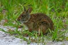 florida wild life | Florida Wildlife Pictures; Photos of Florida Mammals and Reptiles