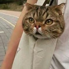 Funny Animal Pictures, Funny Animals, Cute Animals, Cute Baby Cats, Cute Babies, Cute Creatures, Beautiful Creatures, Cat Emoji, Girl Hiding Face