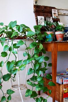 golden pothos for inside:    stays green even in the dark  choose golden or neon  Ensure that it will hang.    Easy care and cleans air pollutants ftw.