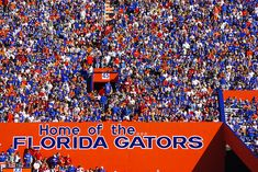 This is The Swamp...home of the Florida Gators