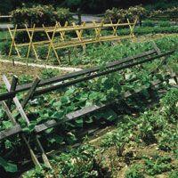 Vertical Gardening Plant tips.
