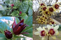 Vonné kvetoucí keře Trees And Shrubs, Plants, Lawn And Garden, Plant, Planets