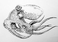 Pen and Ink Octopus on Behance                              …