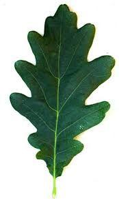 Image result for leaves