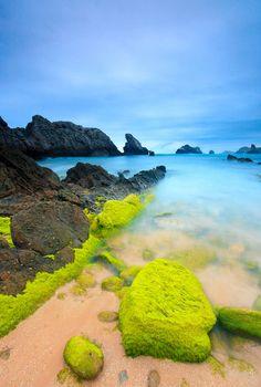 Playa de Somocuevas, Costa Quebrada, Puerto Rico - Bright Green Moss.