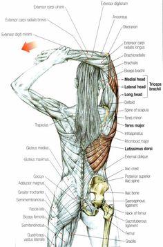 Alongamento tríceps
