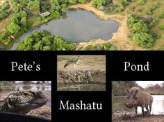 Pete's Pond in Africa! Great place to watch wild animals in action.