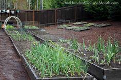 Mavis Butterfield's Backyard Garden Pictures #Garden #Gardening