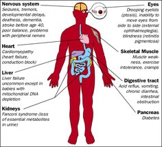 Parts of the body Mitochondrial disease affects.