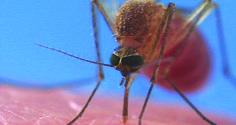 Mosquito Bites: allergies, mosquito diseases,prevention,treatment
