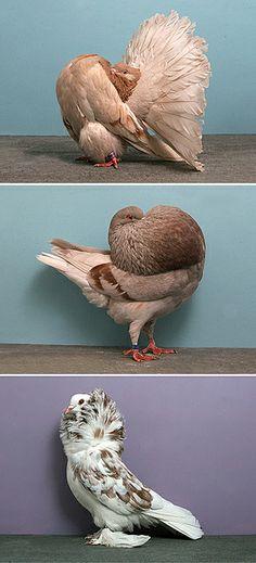 pigeon01 | Flickr: partage de photos!