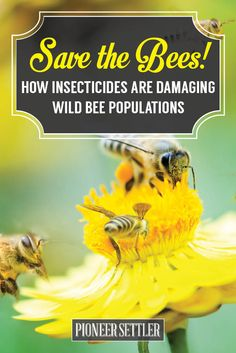 NEWS: The Bee Population is Declining, what can we do? | How to Save the Bees Tips and Ideas by Pioneer Settler http://pioneersettler.com/bee-population-decline-save-the-bees