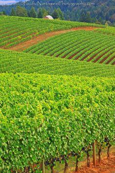 Solvang fields 50 States, Iowa, Danish, Denmark, Fields, Vacations, Vineyard, California, Community