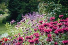 Border planting at The Garden of St Erth