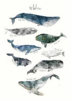 Can be ordered in different variantes of print at Juniqe… Beautiful illustration! Can be ordered in different variantes of print at Juniqe. Art Mural, Fuchs Illustration, Whale Illustration, Ballon Illustration, Whale Art, Whale Sharks, Humpback Whale, Wale, Illustrations Posters