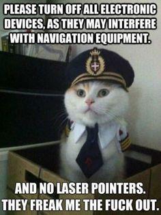 Pilot kitty