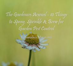 The Gardeners Arsenal – 10 Things to Spray, Sprinkle & Brew for Garden Pest Control