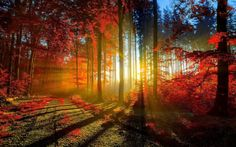 Image discovered by Vivi Rindom. Find images and videos about nature, sun and autumn on We Heart It - the app to get lost in what you love. Foto Nature, All Nature, Autumn Forest, Forest Light, Autumn Fall, Autumn Leaves, Forest Path, Magical Forest, Maple Leaves