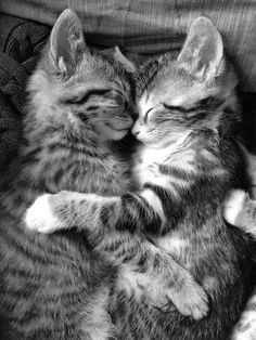 Cute kittens sleeping by eachother hugging Cat Breeds, Cool Cats, Kids, Animals, Cat Races, Toddlers, Animales, Breeds Of Cats, Boys