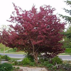 22 Best Trees Screening Images Plants Privacy Trees