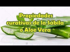 Propiedades Curativas de la Sabila o Aloe Vera - Sabila Planta Medicinal - Aloe Vera Beneficios - YouTube