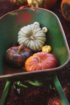 pumpkins green purple orange