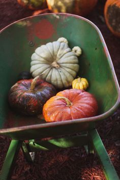 pumpkins green purple orange