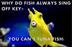 Off Key Tuna Fish Pun - funny - Jokes Cute Jokes, Stupid Jokes, Corny Jokes, Mom Jokes, Funny Jokes For Kids, Funny Jokes To Tell, Funny Puns, Funny Stuff, Bad Puns