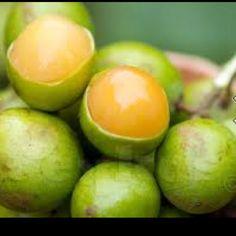 Eastern Caribbean fruit called Ginip - in puerto rico they're called quenepas! Puerto Rican Dishes, Puerto Rican Cuisine, Puerto Rican Recipes, Comida Latina, Exotic Fruit, Tropical Fruits, Salvadoran Food, Nicaraguan Food, Comida Boricua