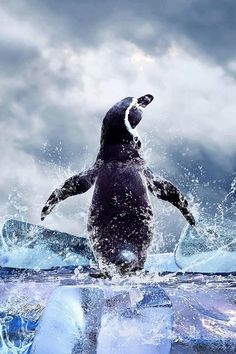 m-a-t-c-h-a:    earthsfinest:    (via Penguin by Source)        Animal/ Nature/ Color blog!