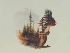 Double-Exposure Photographs Let You See Your Favourite Animals In A Whole New…
