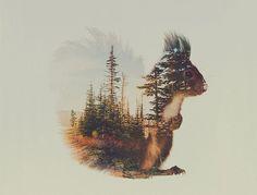 Andreas Lie est un photographe norvégien qui réalise d'étonnantes photos double exposition animaux-paysage.